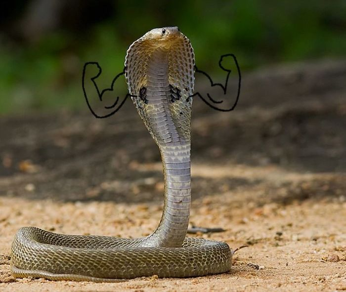 funny snakes pics doodle muscular