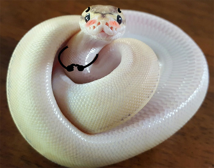 funny snakes pics doodle shy
