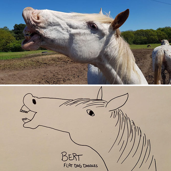 jay cartner flat dog doodles bert horse