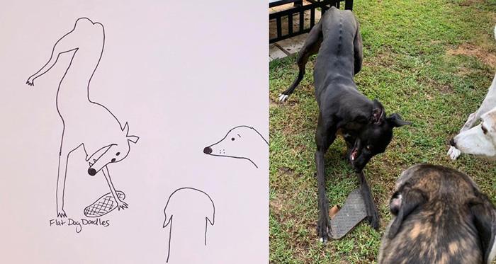 jay cartner flat dog doodles kitty greyhound