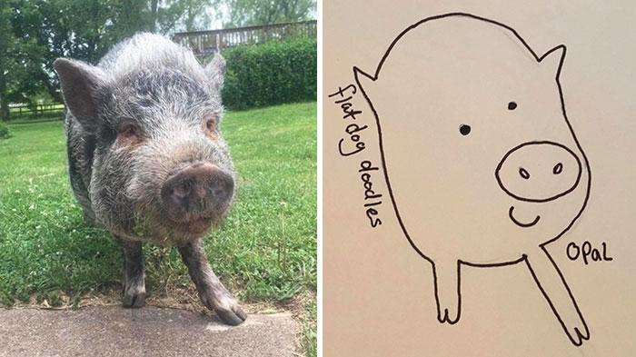 jay cartner flat dog doodles opal pig