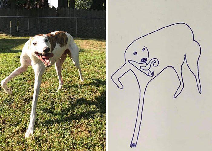 jay cartner flat dog doodles stanley