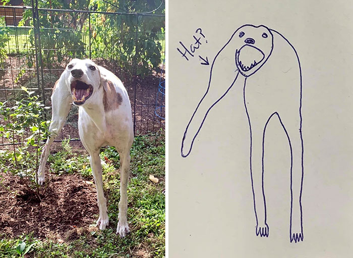 jay cartner flat dog doodles stanley awkward poses