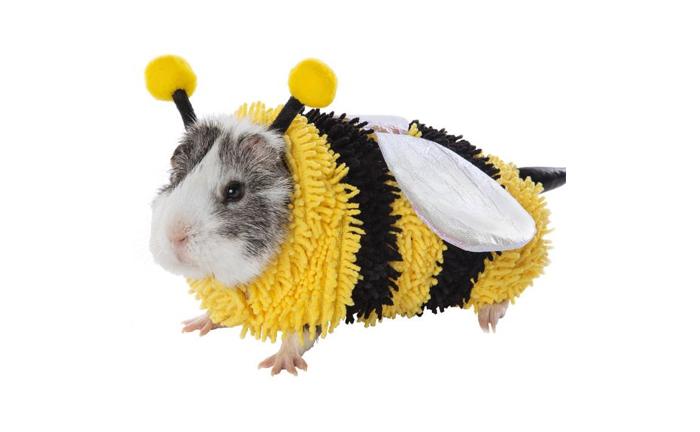 petsmart bee hamster halloween costumes