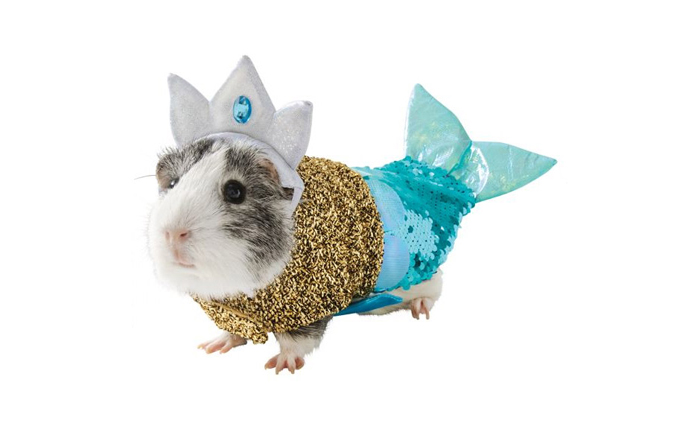 petsmart mermaid hamster halloween costumes