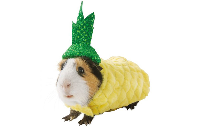 petsmart pineapple hamster halloween costumes