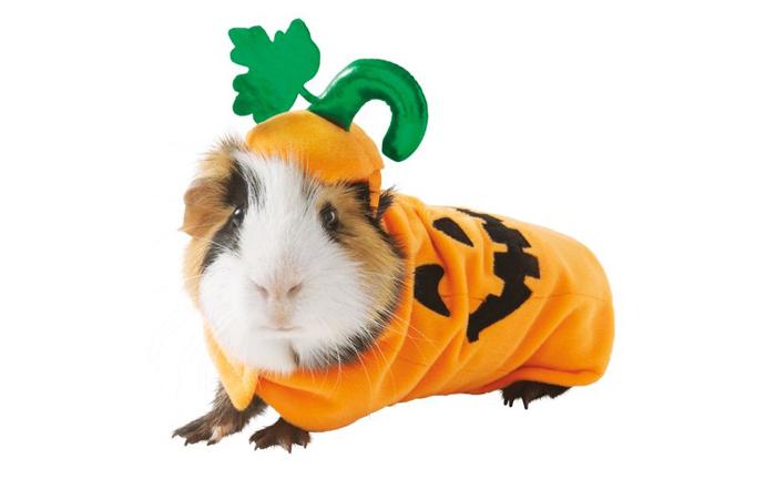 petsmart pumpkin hamster halloween costumes