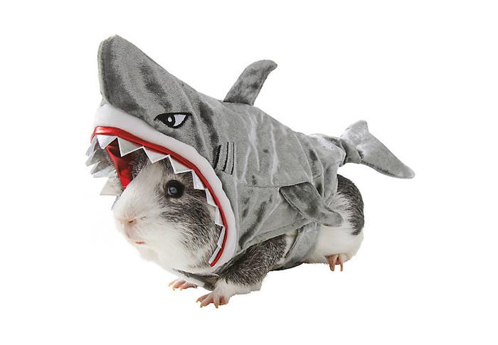 petsmart shark hamster halloween costumes