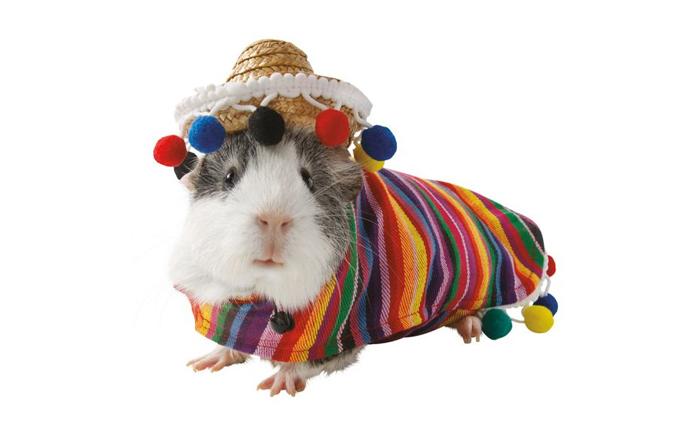 petsmart sombrero hamster halloween costumes