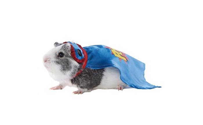 petsmart superhero hamster halloween costumes