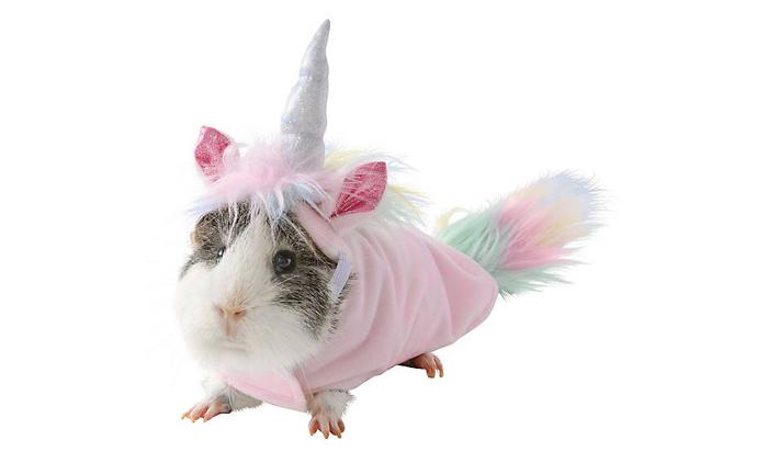 petsmart unicorn hamster halloween costumes