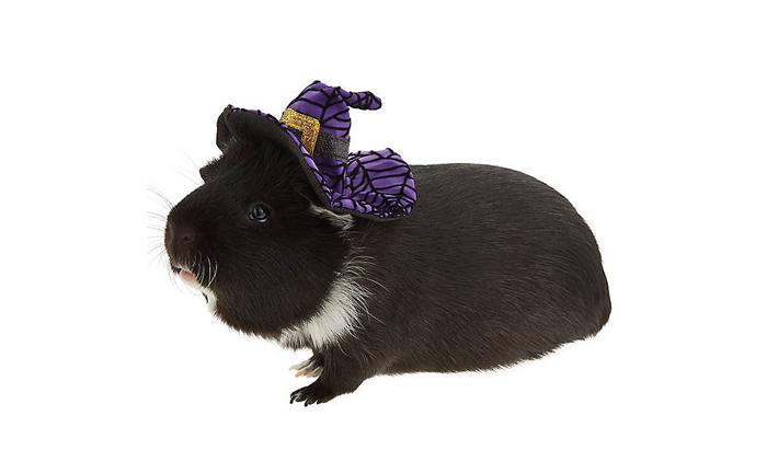 petsmart witch hamster halloween costumes