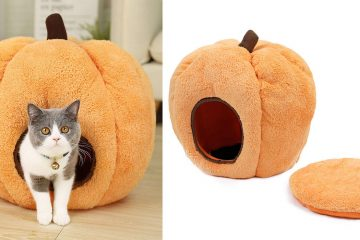 pumpkin cat bed