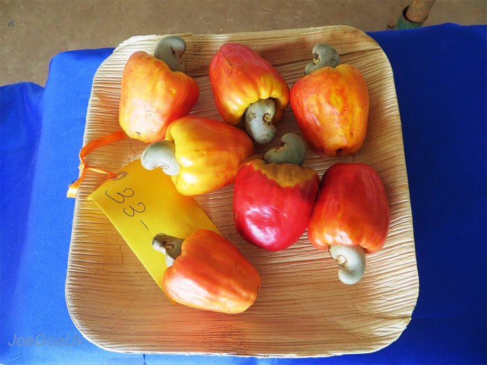 reddit interesting facts cashew fruits