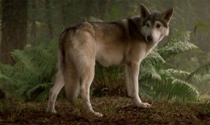 reddit interesting facts dog wolves wagging tails cgi