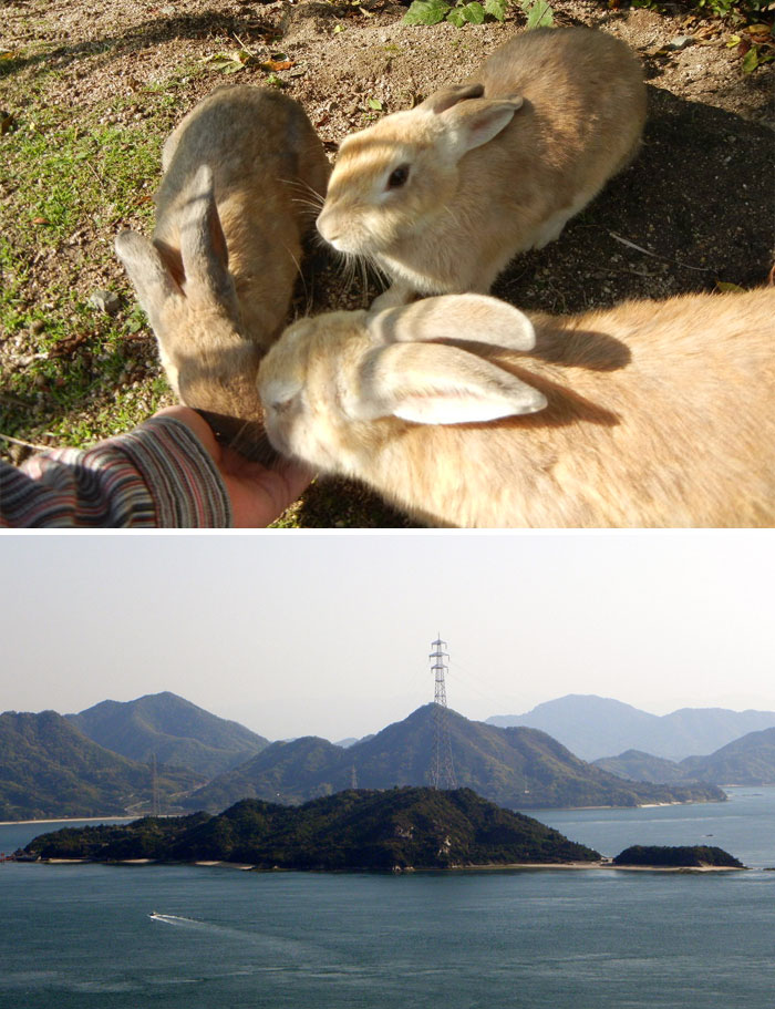 reddit interesting facts japan island fluffy bunnies