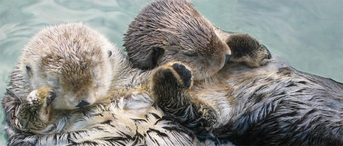 reddit interesting facts sea otters holding hands while sleeping