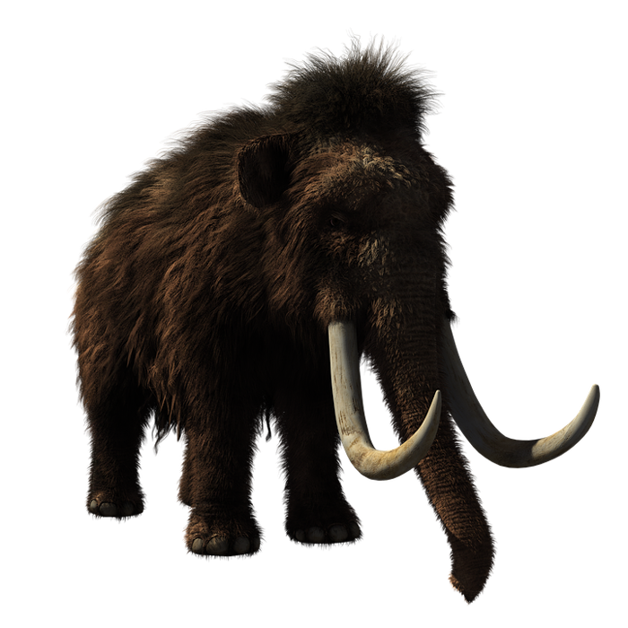 reddit interesting facts wooly mammoth