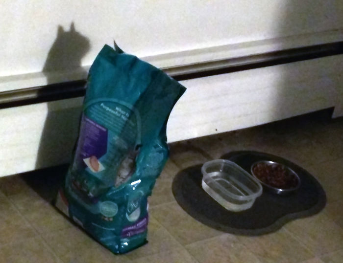 shadow optical illusions cat food