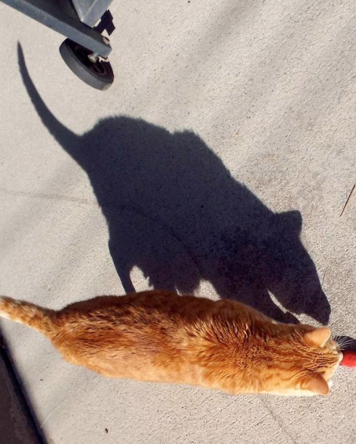 shadow optical illusions cat mouse