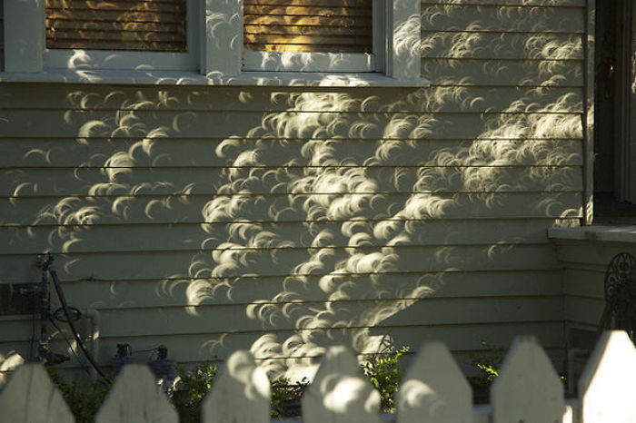 shadow optical illusions leaves solar eclipse