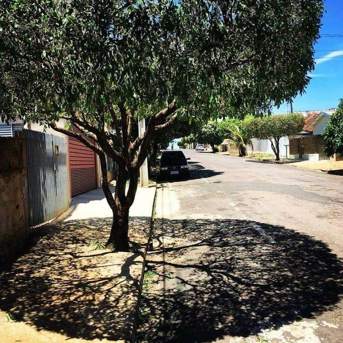 shadow optical illusions tree
