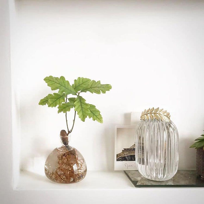 Oak Plant in Glass Vase on Table