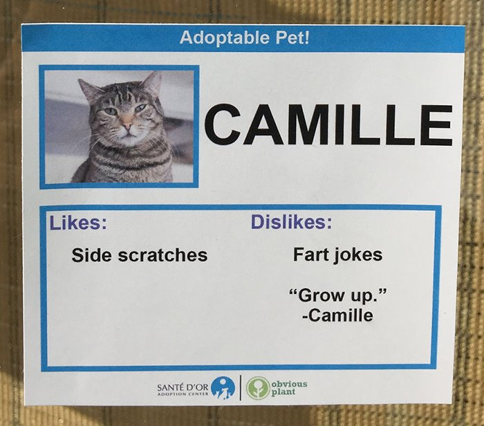 Adoptable Pet Card Showing Likes and Dislikes of a Cat Named Camille
