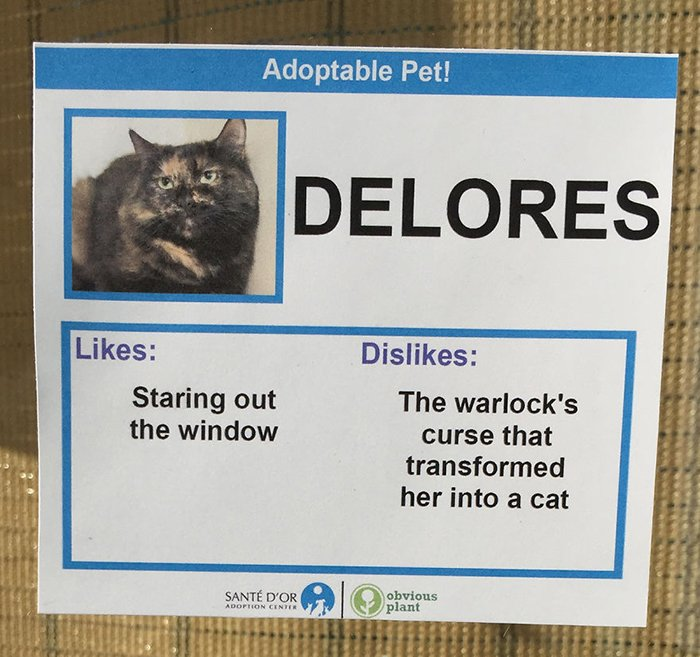 Adoptable Pet Card Showing Likes and Dislikes of a Cat Named Delores
