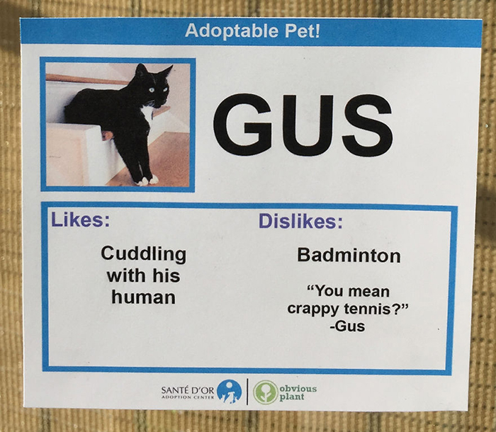 Adoptable Pet Card Showing Likes and Dislikes of a Cat Named Gus