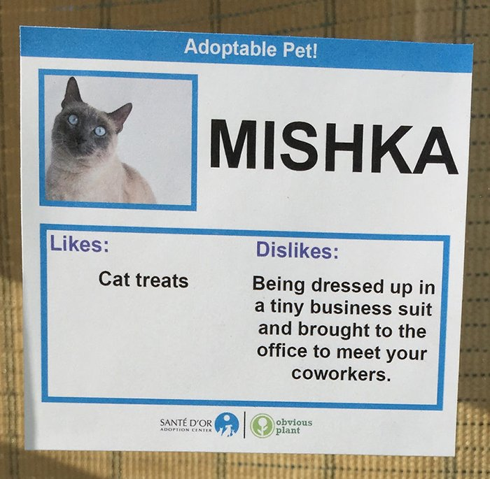Adoptable Pet Card Mishka