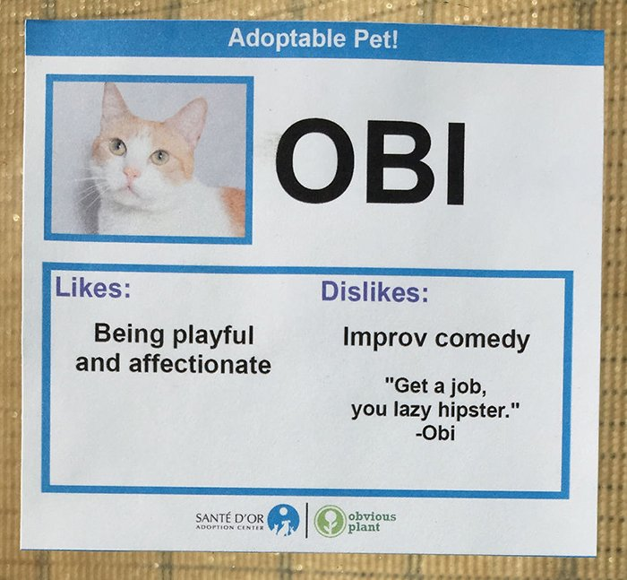 Adoptable Pet Card Showing Likes and Dislikes of a Cat Named Obi