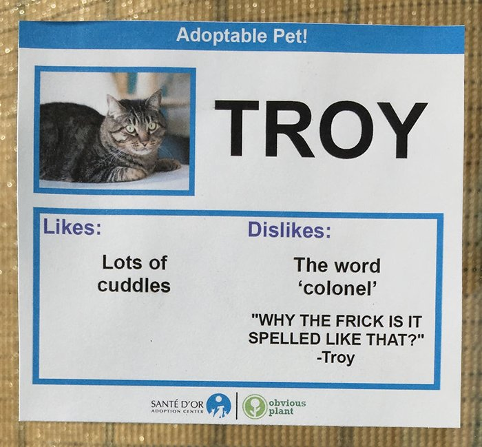 Adoptable Pet Card Showing Likes and Dislikes of a Cat Named Troy