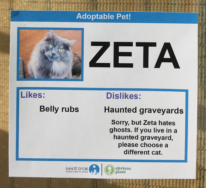 Adoptable Pet Card Showing Likes and Dislikes of a Cat Named Zeta