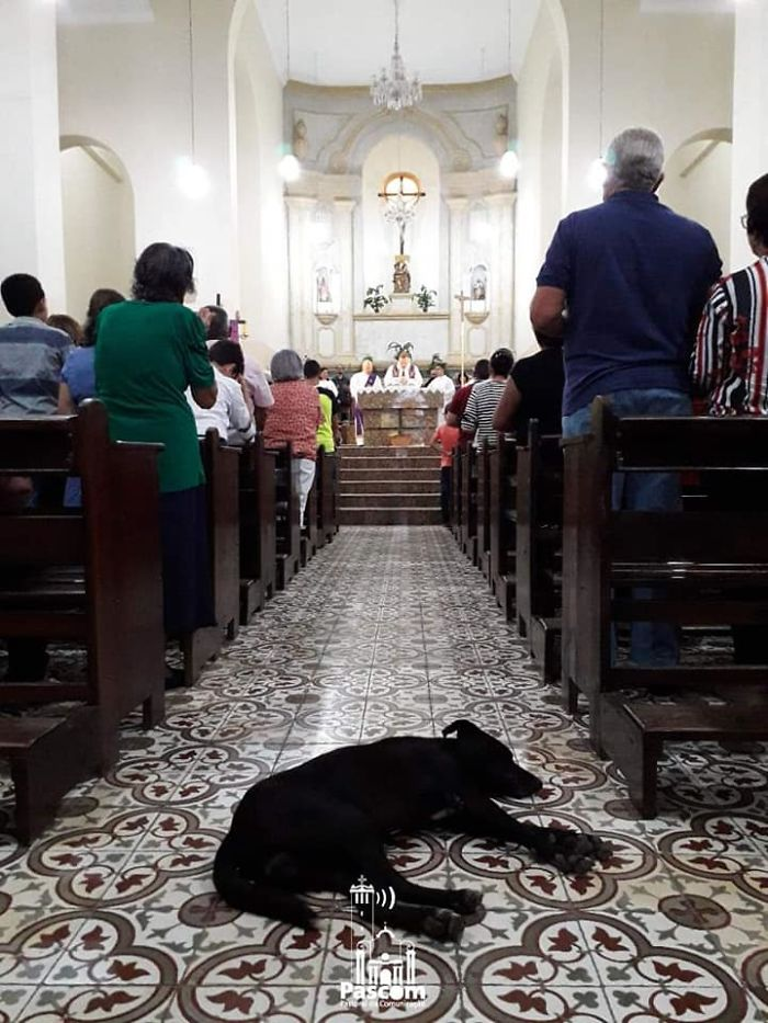 Black Stray Dog Sleeping along the Church's Aisle