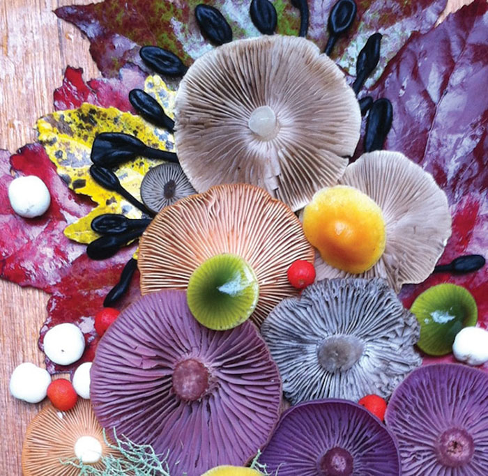 Colorful Mushroom Photos Mushroom Medley by Jill Bliss