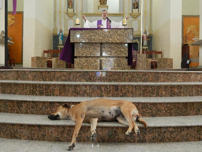 Father João Paulo Araujo Gomes Celebrating Mass While a Stray Dog Sleeps on the Church's Altar Steps