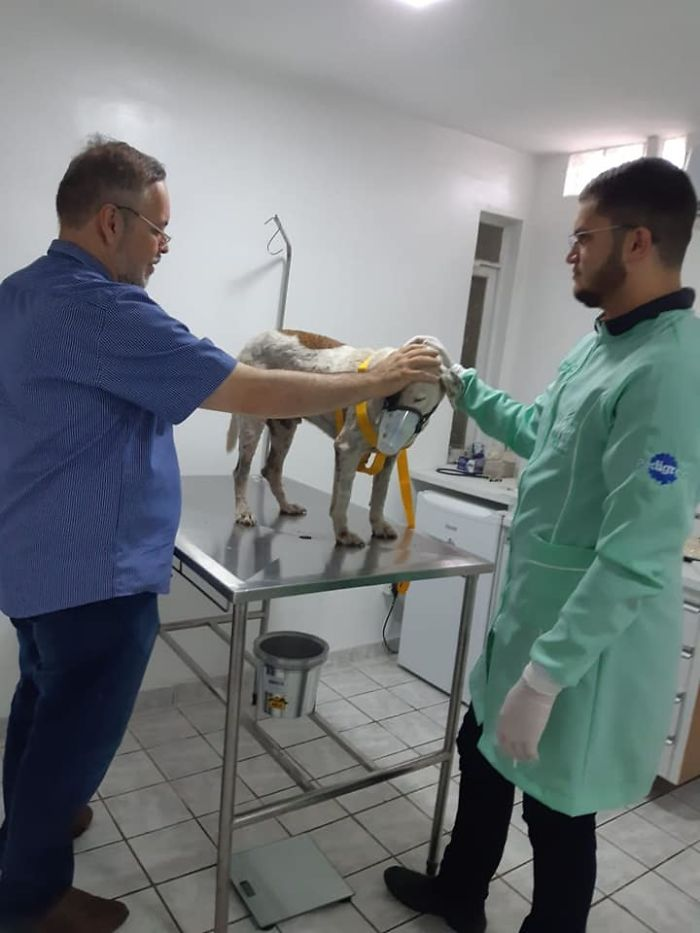 Father João Paulo Araujo Gomes Praying over a Sick Stray Dog at a Veterinary Clinic