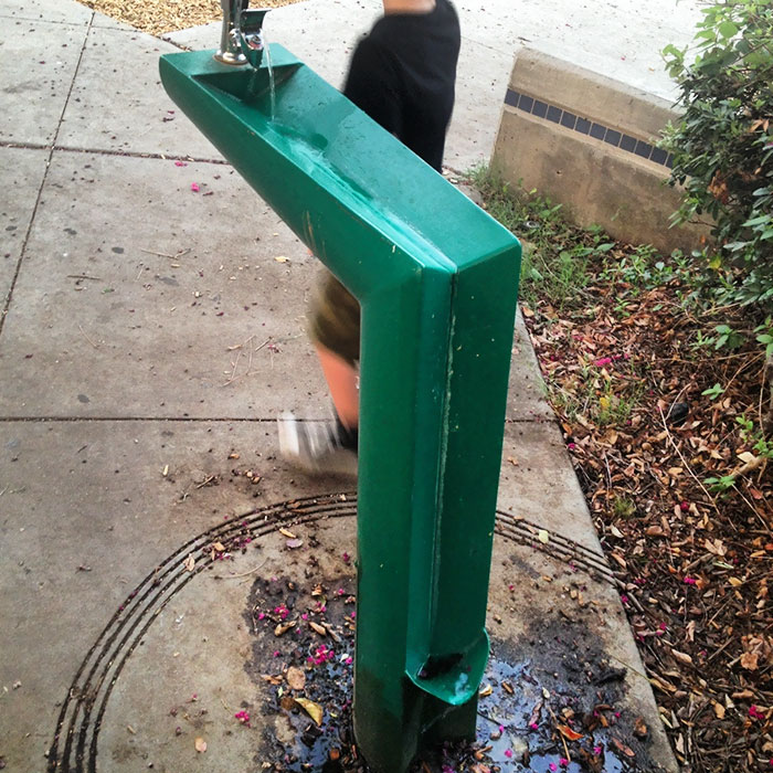 Green Drinking Fountain with a Section for Dogs