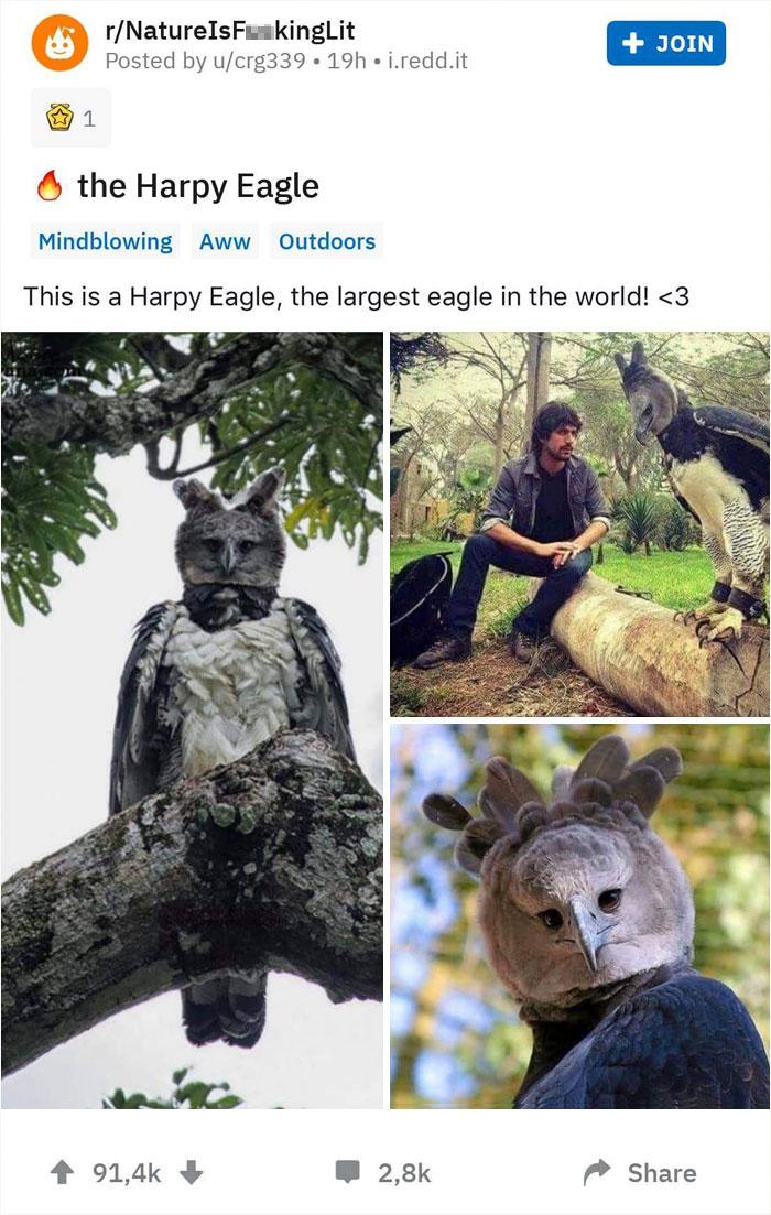 Harpy Eagle Reddit Post