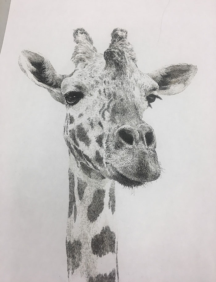 Manabu Ikeda's Giraffe Test Drawing with Left Hand
