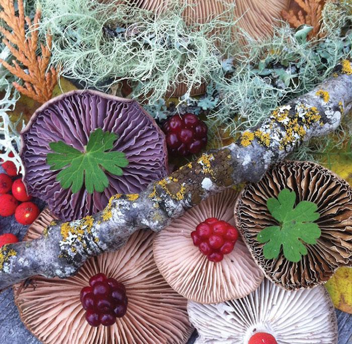 Mushroom Medley Cluster by Jill Bliss