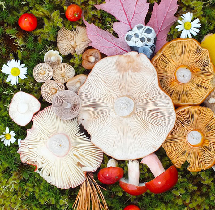 Mushroom Medley Flowers and Moss by Jill Bliss