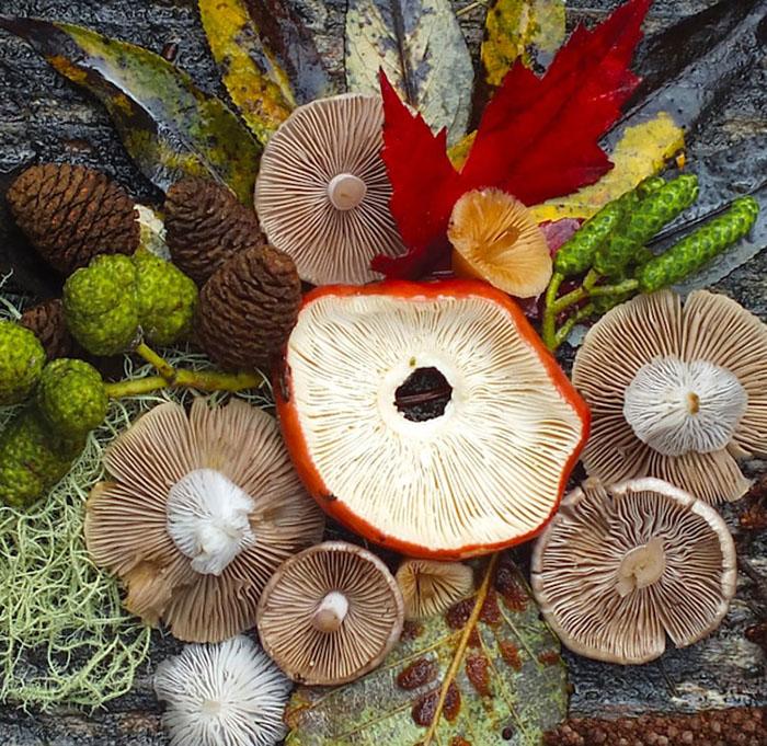 Mushroom Medley Rainbow by Jill Bliss