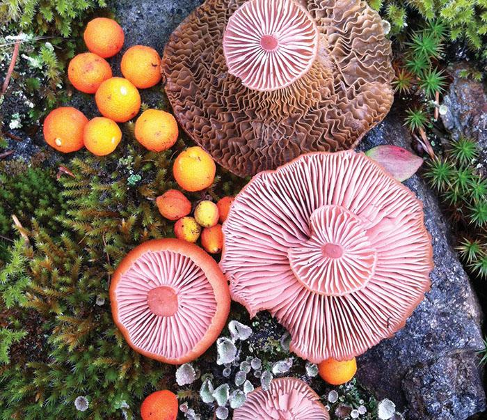 Mushroom Medley in Moss #2 by Jill Bliss