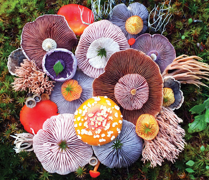 Mushroom Medley with Agaric by Jill Bliss