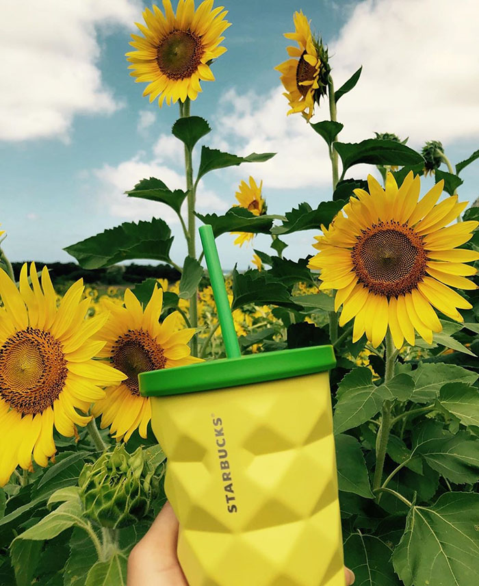 Starbucks' Pineapple Tumbler with Sunflower Backdrop