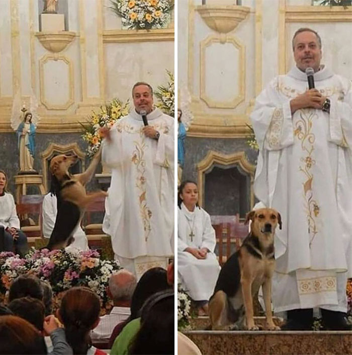 Stray Dog Standing Beside Father João Paulo Araujo Gomes as He Celebrates Mass