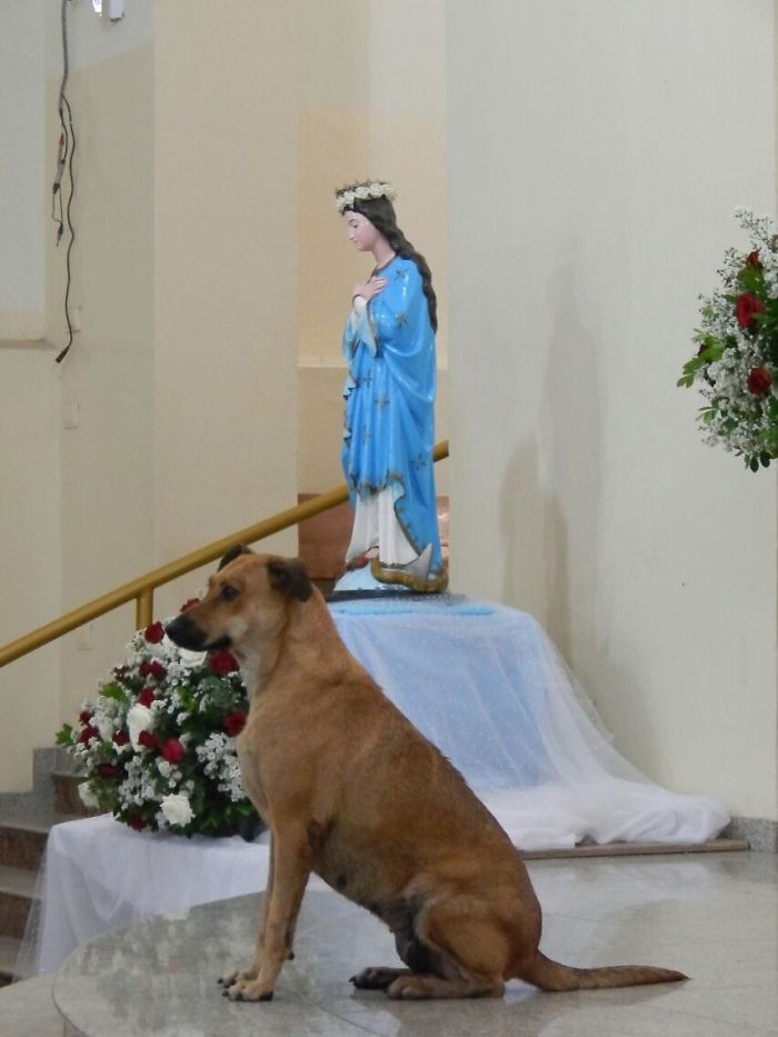 Stray Dog Standing Near the Statue of Virgin Mary