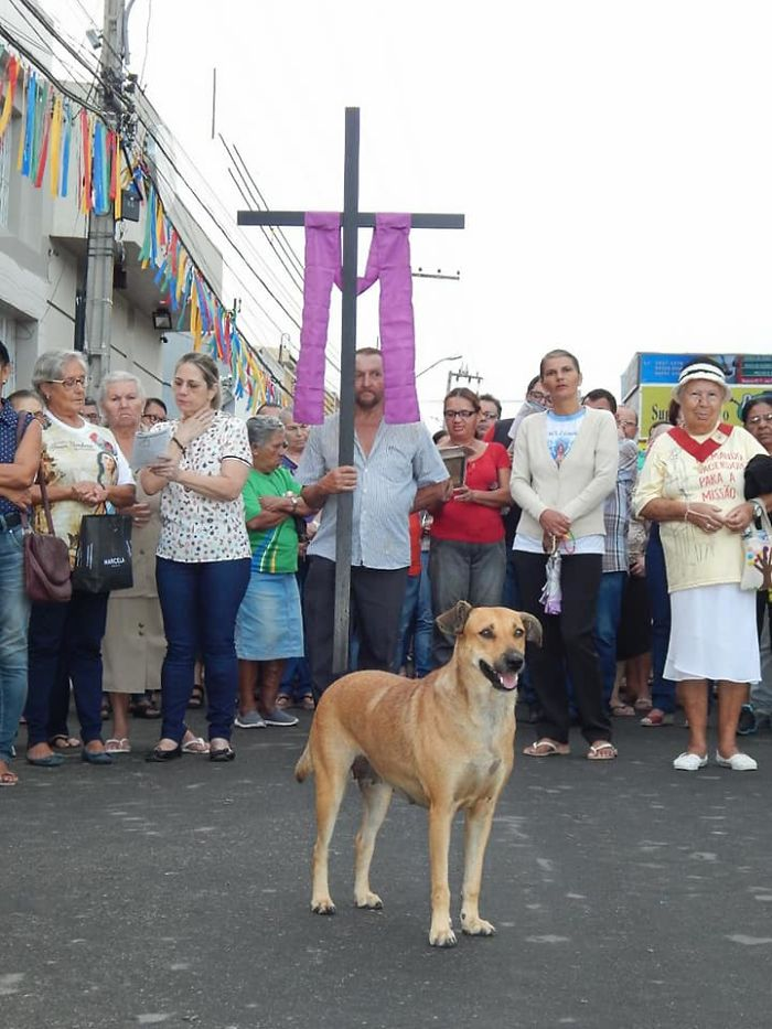 Stray Dog Standing in front of a Procession